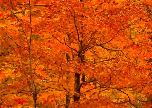 17 - Autumn Color Splash
