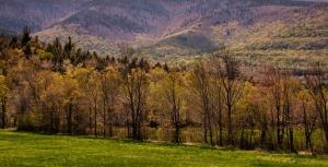 15 - Catskill Trees